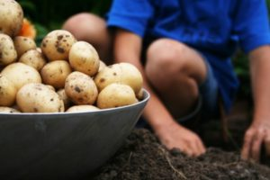 Jesenske ali krompirjeve počitnice
